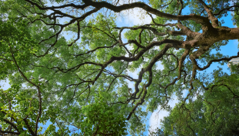 Tree Preservation Orders Tpo The Right Of Entry For A Local Planning Authority